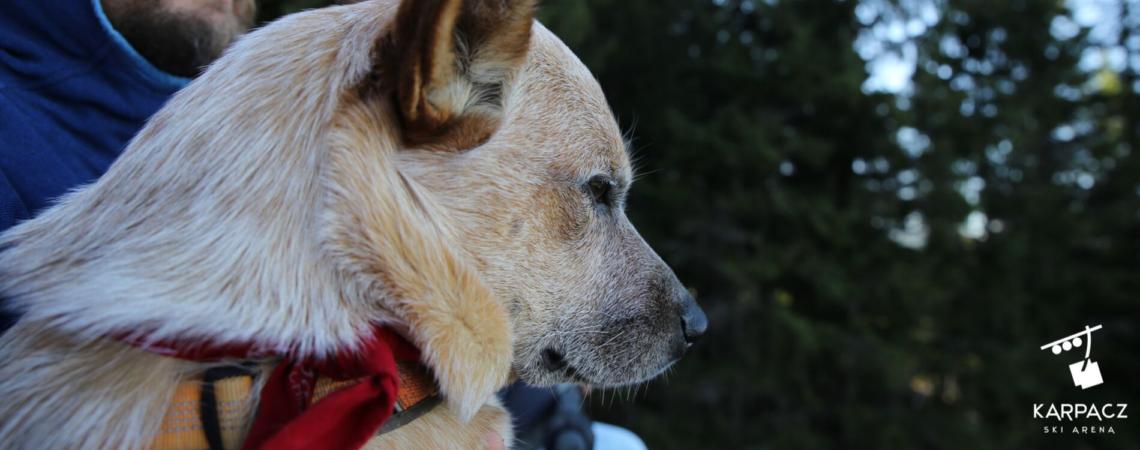 Psy Karkonosze